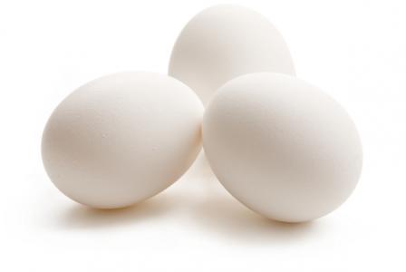 ovos-marinhave-incubacao